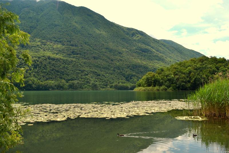 Lago Piano Seerosen